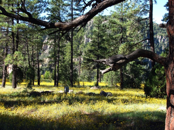 Arizona mountain beauty